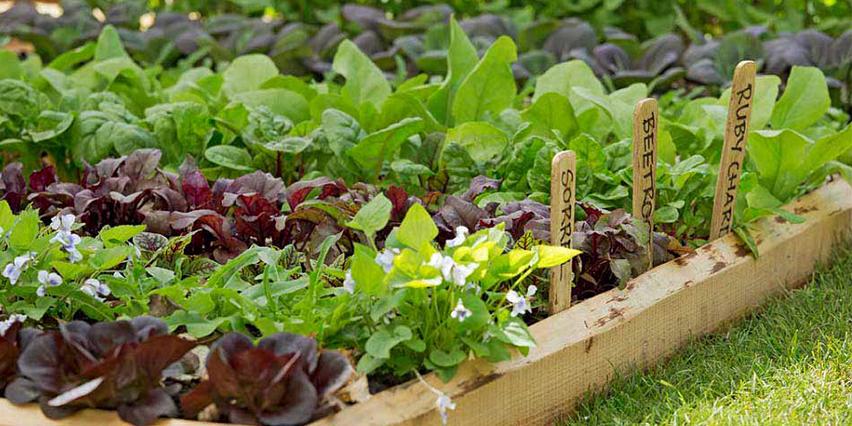 Community garden rental thorold