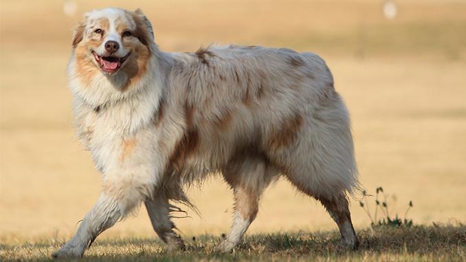 Thorold Dog Park Location Survey